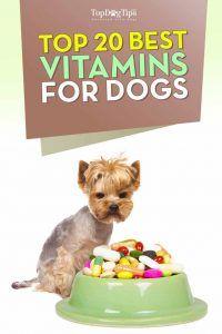 Las mejores vitaminas para perros para Mascotas salud Гіptima