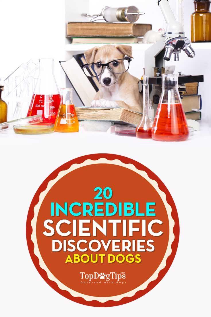 Las mejores estudios científicos sobre los perros