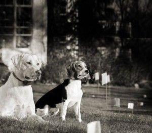 Mejor Perro Invisible Cercos