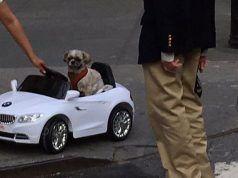 Perro que conduce un BMW