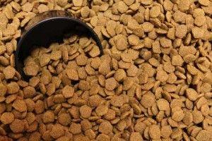 Top Mejor seco alimentos para perros en línea para todas las edades