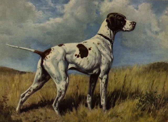 25 Razas de perros extintos que no sabía que existían