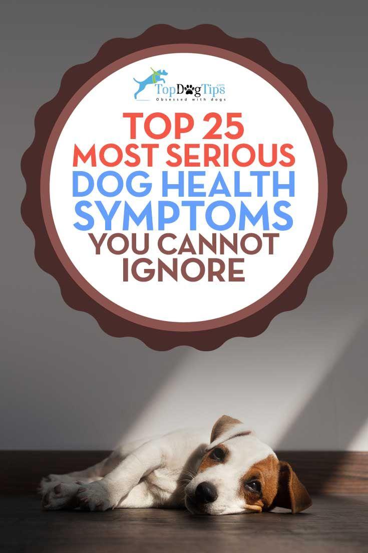 La mayoría de los síntomas graves de salud que el perro no puede ser ignorada
