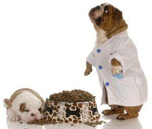 CГЎncer de perro y pienso para perros