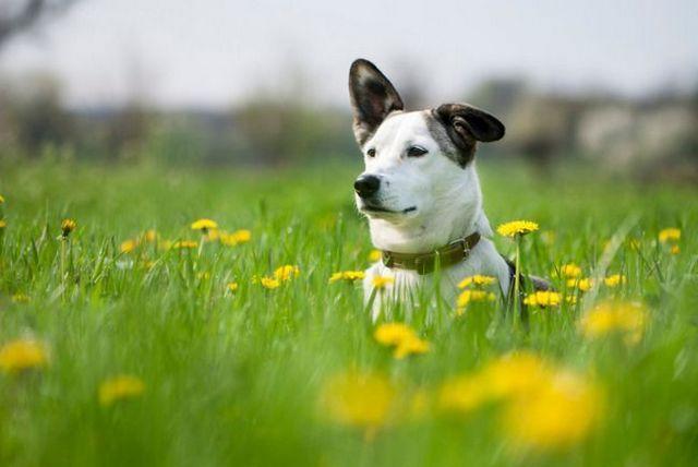 3 Remedios naturales para perros: aceite de coco, calabaza enlatada, tierra de diatomeas