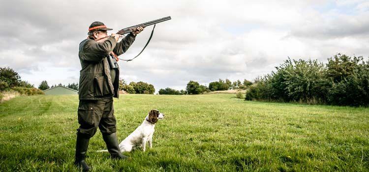 Top perro de caza suministros que`ll Make You A Better Hunter