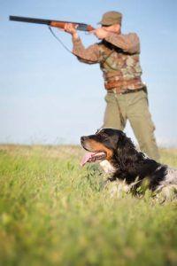 La caza con perros suministros