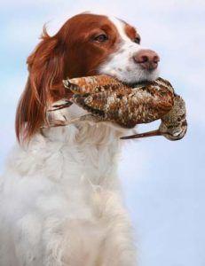 Las mejores fuentes del perro del arma para Game Hunters para ayudarle Tanto en cazas