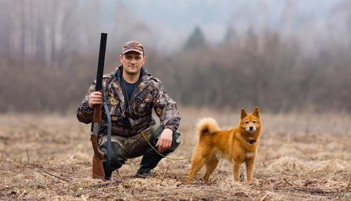suministro de perro de caza para el campo