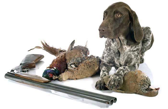 Los mejores productos de abastecimiento del perro de arma de los cazadores de caza