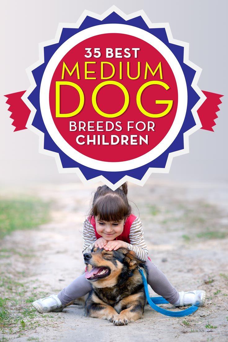 Mejores razas de perro medio y pequeГ±o perros para los niГ±os