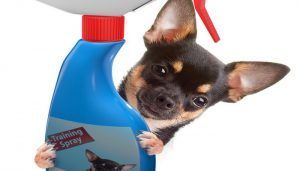 El mejor perro spray repelente para corregir el comportamiento Bad Dog