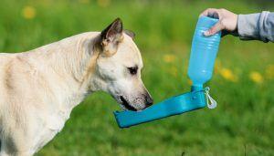 Top 5 - El mejor perro de agua de la botella