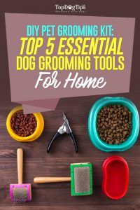 Top mejores herramientas de peluquerГa canina