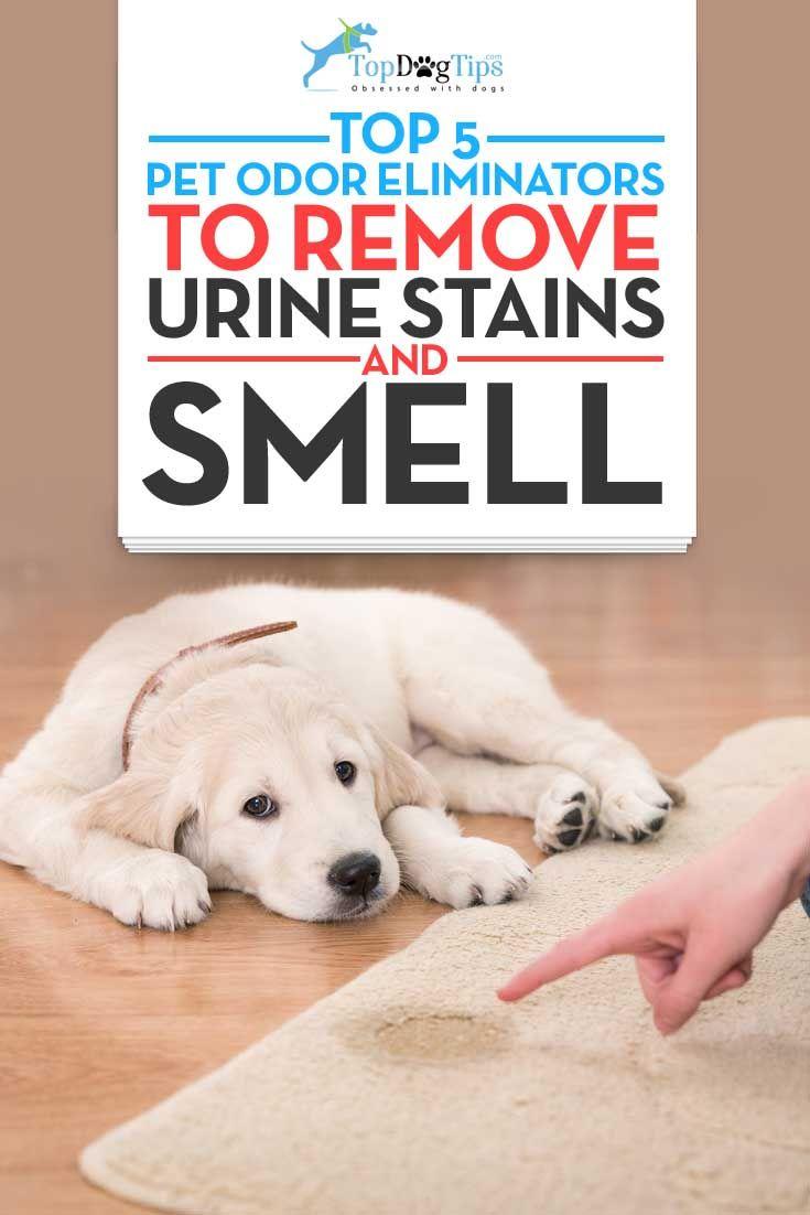 Top mejor mascota eliminadores de olores para la Eliminación de olor a orina de perro