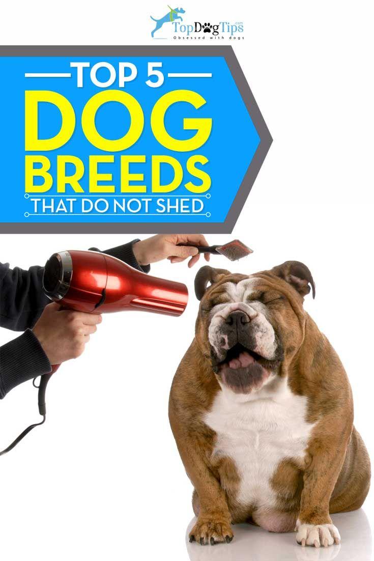 Top Mejor Shed Perros libres