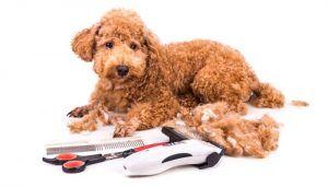 Mejor Clippers Dog silencioso para el aseo libre de ruidos de perros