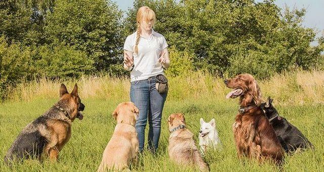 5 Comandos esenciales que puedes enseñar a tu perro