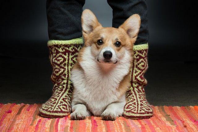 5 Minutos retos para usted y su perro