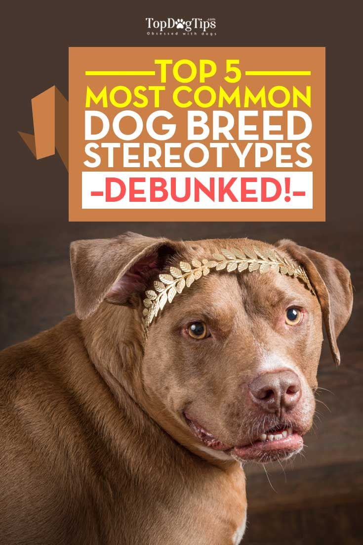 La mayorГa de la raza del perro estereotipos ComГєn Desenmascarada