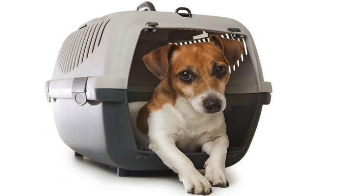 Los perros de entrenamiento del cajГіn