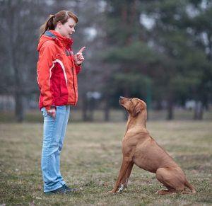 5 Comandos de obediencia todos los perros necesitan saber