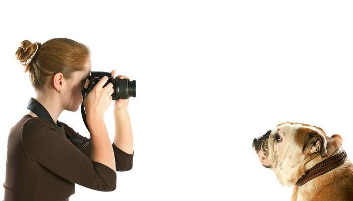Fotografía de Expertos`s Tips for Dog Photo Shoots