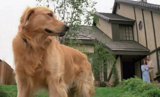 5 PelГculas de miedo para amantes de los animales (pista: vive el perro)