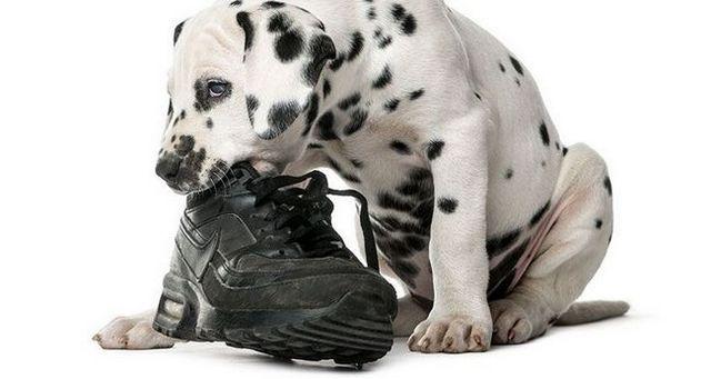 5 Pasos para dejar de masticar perro