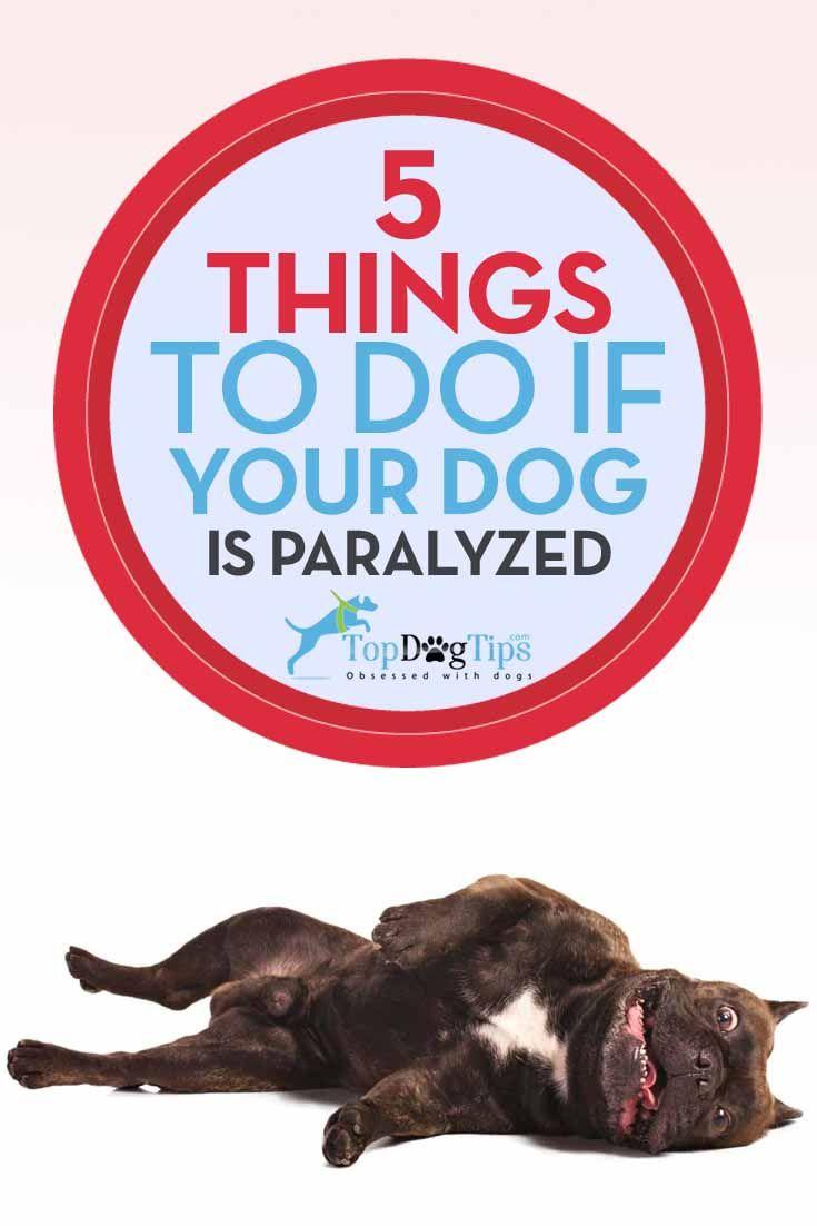 Qué hacer si se paraliza su perro