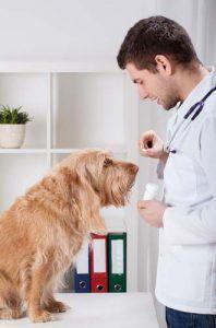 Los antihistamínicos pueden ayudar a aliviar la comezón en los perros