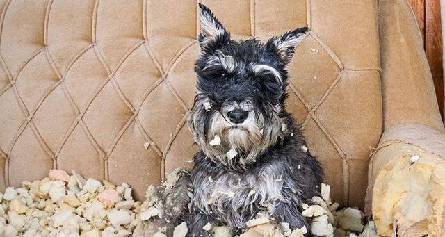 5 Consejos para ayudar a la ansiedad de separaciГіn perro