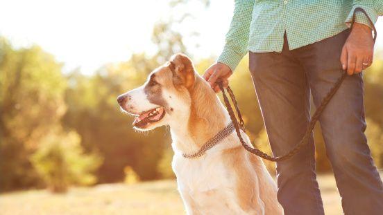 5 Maneras de construir una mejor relación con su perro