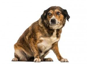 5 Maneras de prevenir las mordeduras de perro