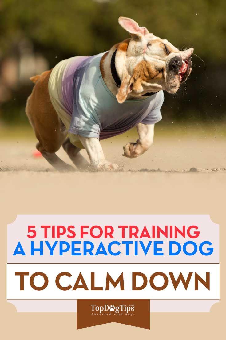 Cómo entrenar a un perro hiperactivo de calmarse