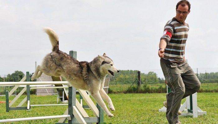 maneras de entrenar a un perro hiperactivo se calmen