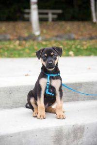 Un cachorro con un arnГ©s del perro de