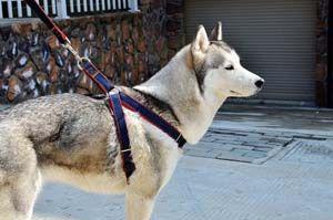 Las mejores arneses para perros que tiran