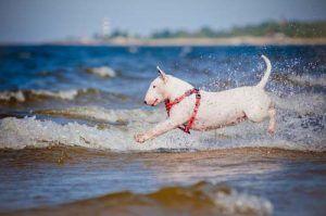 ВїCГіmo escoger los mejores arneses para perros que tiran