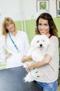 puestos de trabajo tГ©cnico veterinarios para los dueГ±os de perros