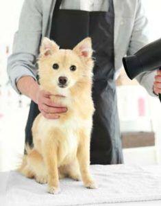 Profesional del perro Groomer listo para trabajar