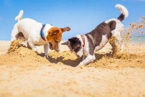 socialización de los perros para evitar los ladridos