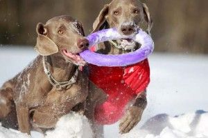 el uso de los juguetes del perro que tranquilo perros