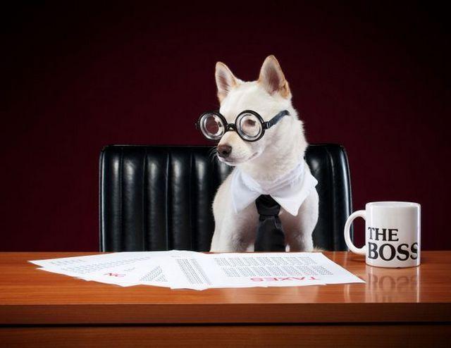 6 Relacionadas con el perro de las deducciones fiscales que puede ser elegible para reclamar