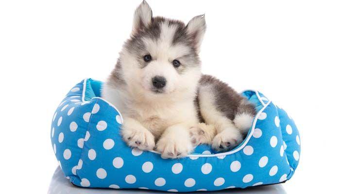 camas para perros y jaulas para cachorros