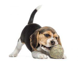 juguetes para perros para un nuevo cachorro