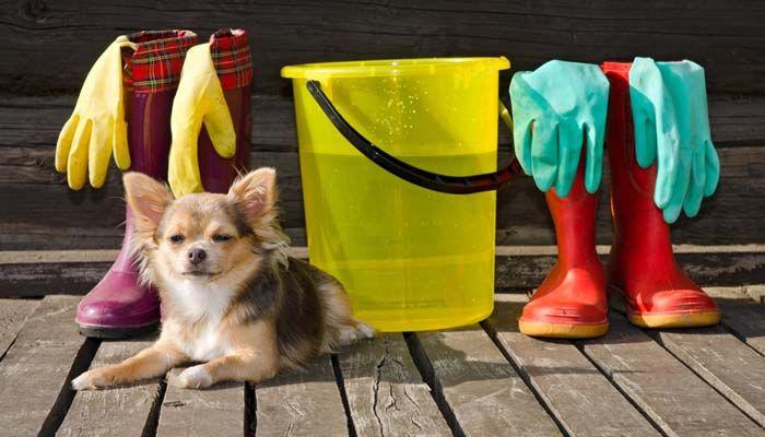 Admite mascotas productos de limpieza del perro