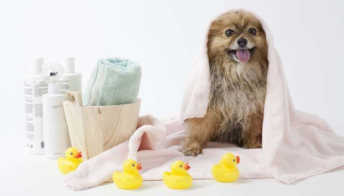 perro supermercado fuentes de la preparaciГіn para un nuevo cachorro