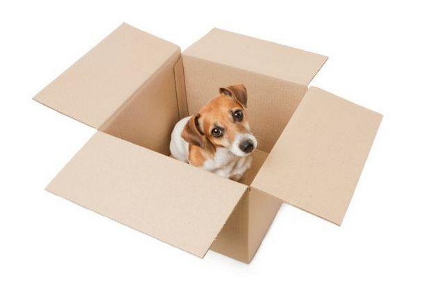 6 Preguntas piden a sus mascotas durante una mudanza