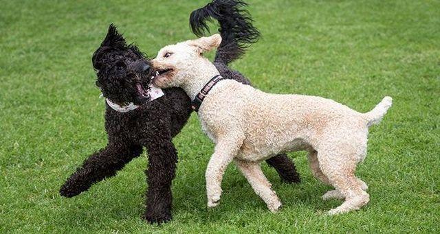 6 Pasos para la gestiГіn de la sobreexcitaciГіn de un perro